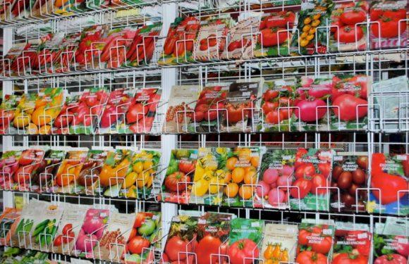 Де в Ямполі купити якісне і недороге насіння