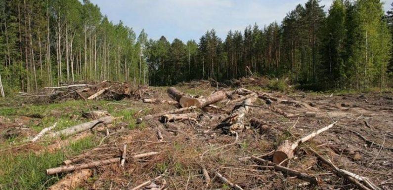 Ямпільські ліси почали знищувати 115 років тому
