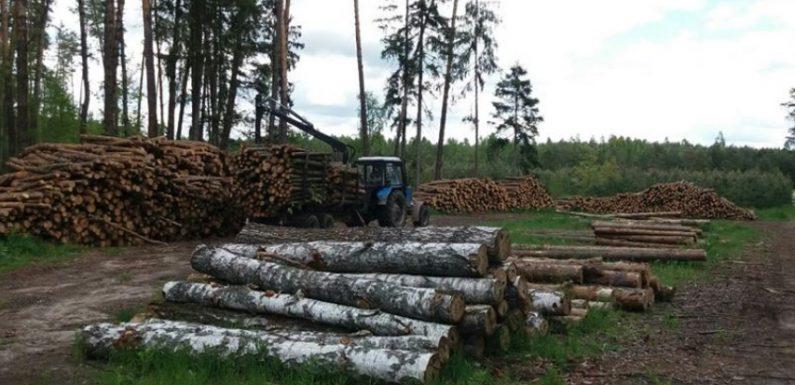 На Ямпільщині побував начальник обласного управління лісового та мисливського господарства