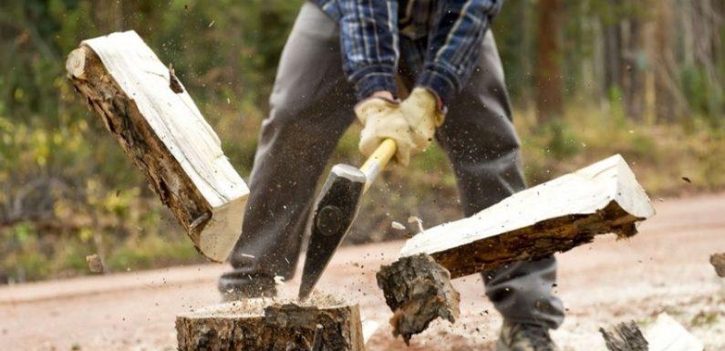 🔴 Чоловіка засудили за крадіжку 0,5 кубометра дров у Ямпільського агролісгоспу