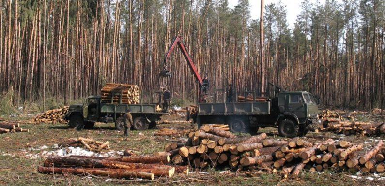 Суд підтвердив, що Ямпільський агролісгосп незаконно не допустив Держекоінспекцію для перевірки повідомлення про розкрадання лісу