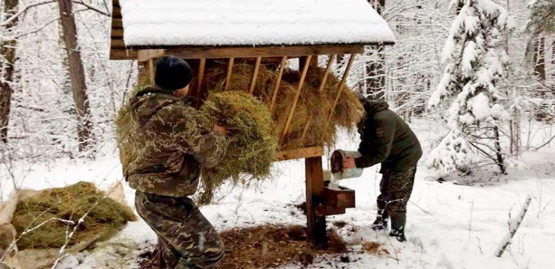 Свеський лісгосп проводить зимову підгодівлю диких тварин