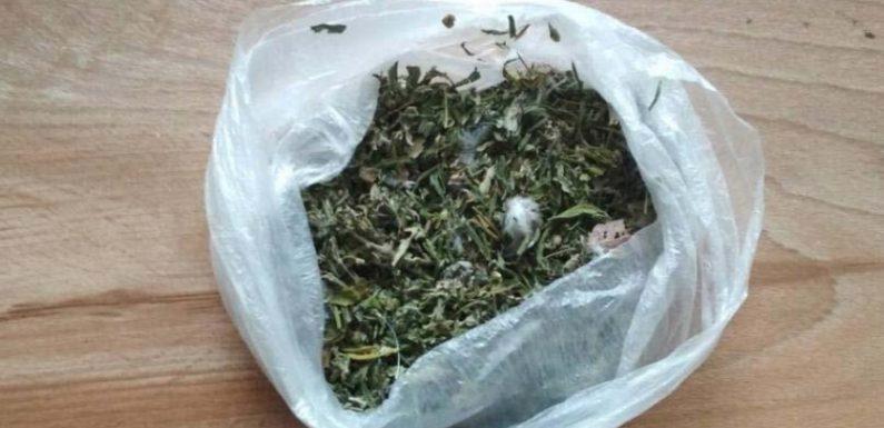 В Києві засудили свесянина за зберігання наркотичних речовин