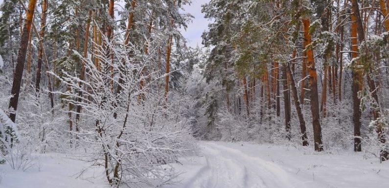 На початку наступного тижня на Ямпільщині збережеться морозна погода