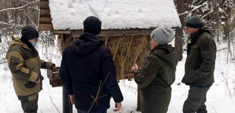 """""""Достатньо для полювання на козуль"""": в лісах Свеського держлісгоспу порахували мисливських тварин"""
