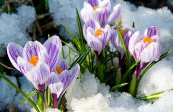 Яка погода буде у Ямполі та Сумській області на вихідних
