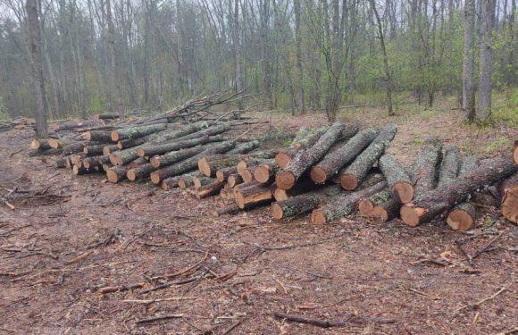Правоохоронці викрили чергову схему розкрадання лісу агролісгоспами на півночі Сумщини