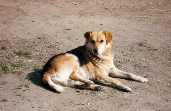 Жінку з Шатрищ повторно судили за порушення правил утримання собак: в березні тварина напала на дівчинку, а в червні – з'їла сусідських птахів