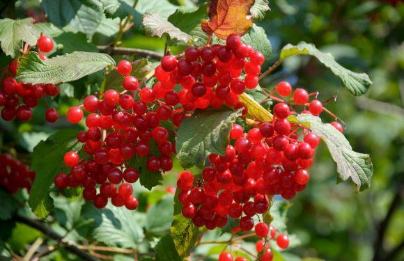 В Ямполі осінь. Вересневі замальовки