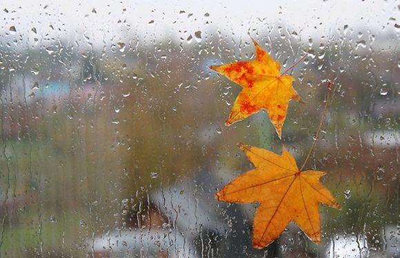 Дощі надовго прийшли в Ямпіль