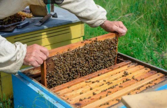 Ямпільські пасічники можуть отримати дотацію від держави у розмірі 200 гривень на одну бджолосім'ю