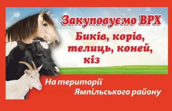 Куплю коней, корів, бичків, телиць, кіз, баранів