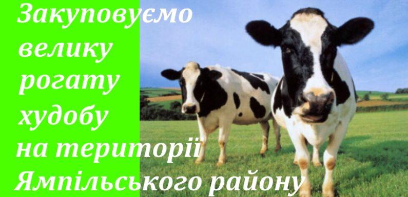 М'ясокомбінат закуповує велику рогату худобу по високій ціні