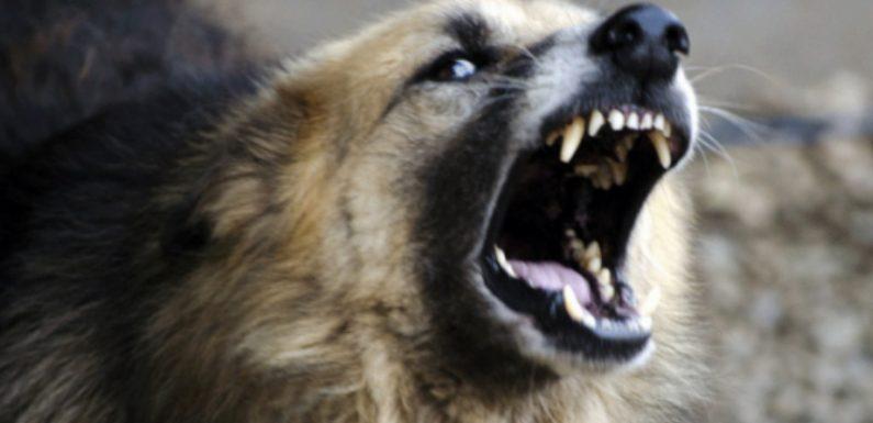 На території смт Свеса зареєстровано випадок сказу у бродячої собаки