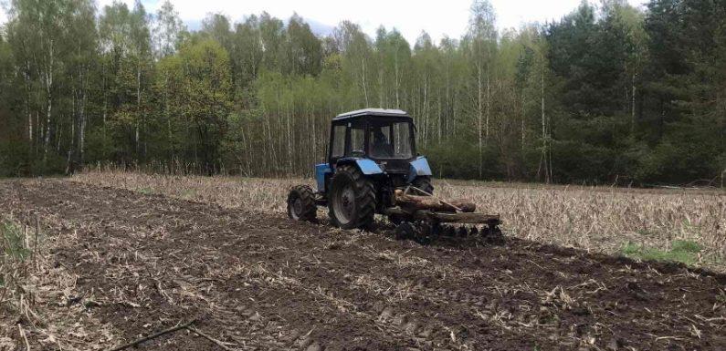 В Прудищанському лісництві для лісових звірів посадили 1 гектар кукурудзи