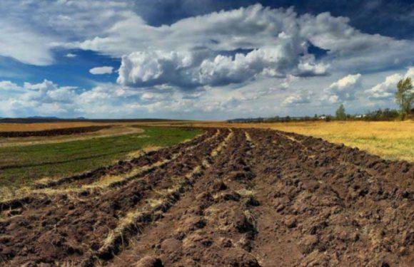 На території Ямпільської громади через аукціон віддали в оренду ще 49 гектар землі
