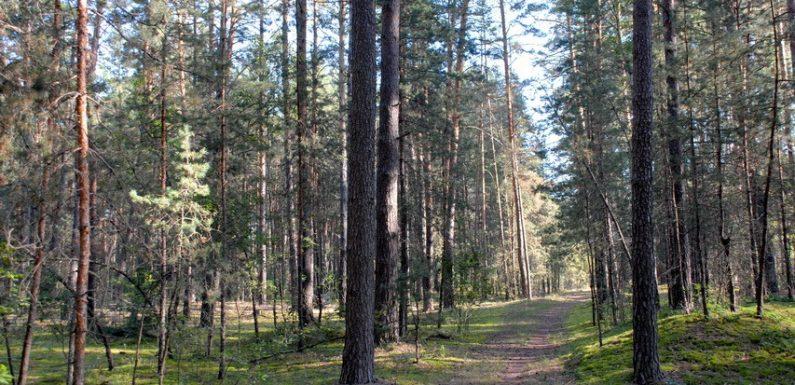 Що відомо про лісовий масив на околиці Ямполя, де сьогодні влаштували свято вирубки лісу