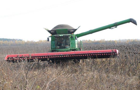 Аграрії почали збирати врожай соняшника на околиці Ямполі (фоторепортаж)
