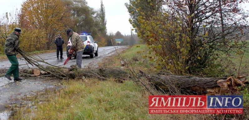 В Ямполі аварійне дерево впало на дорогу територіального значення
